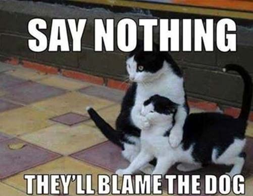 blame the dog joke picture